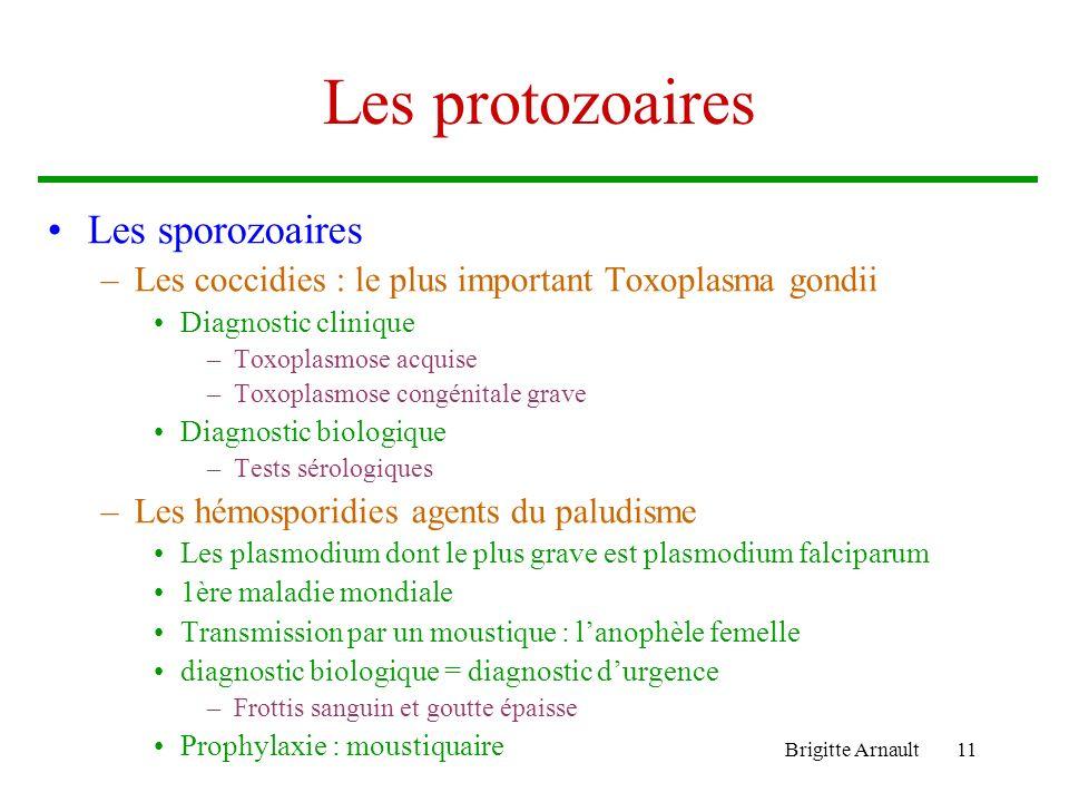 Les protozoaires Les sporozoaires