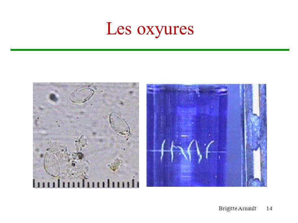 Les oxyures Brigitte Arnault
