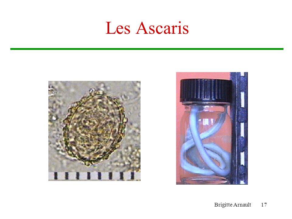 Les Ascaris Brigitte Arnault