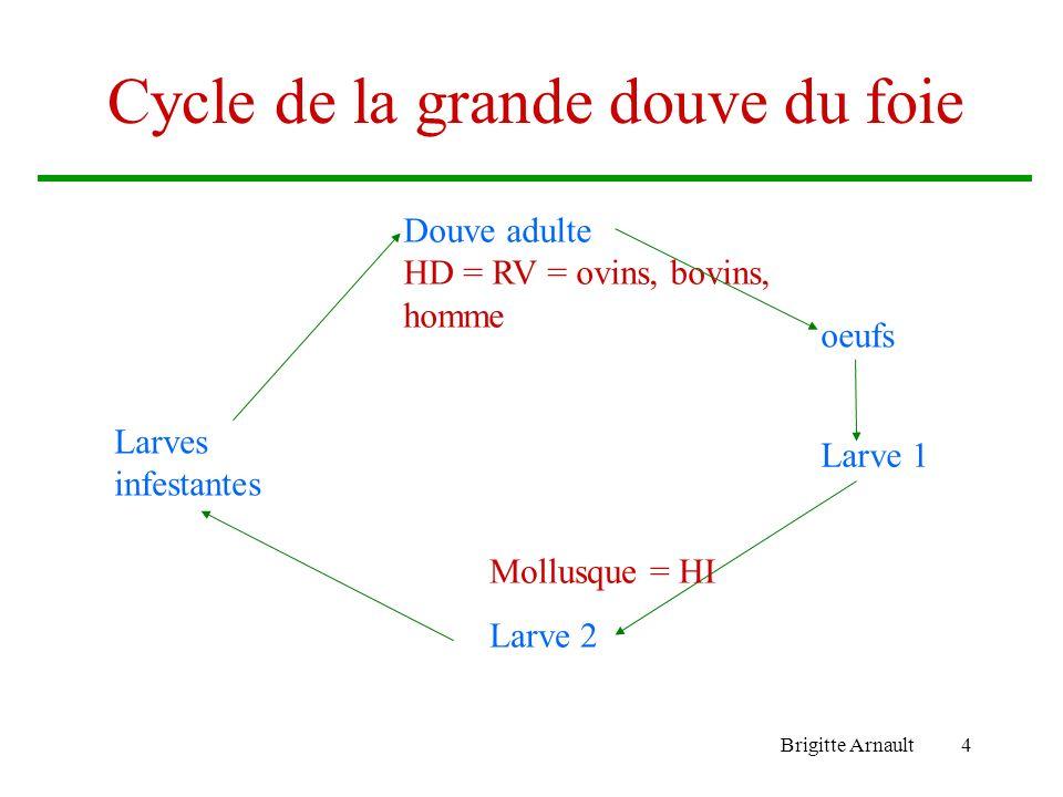 Cycle de la grande douve du foie