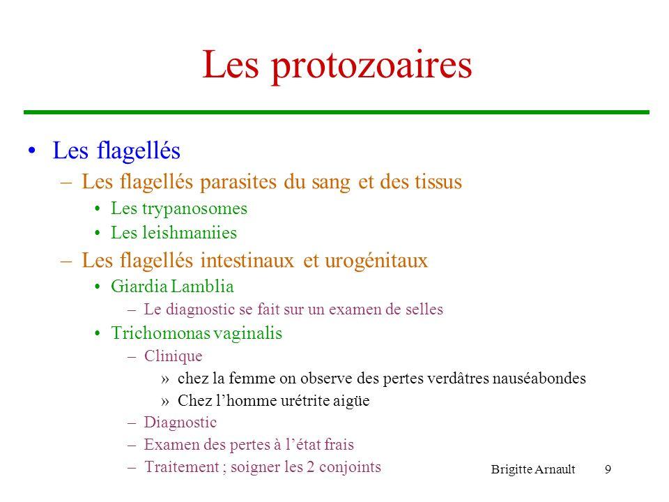 Les protozoaires Les flagellés