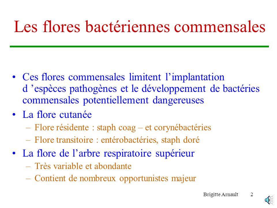 Les flores bactériennes commensales