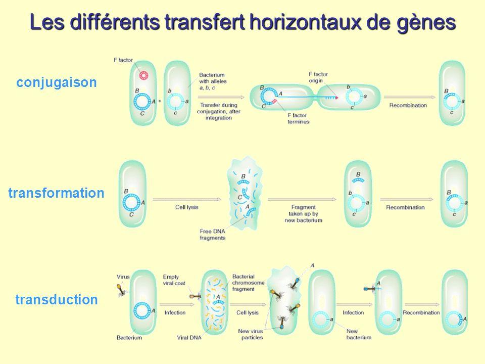Les différents transfert horizontaux de gènes
