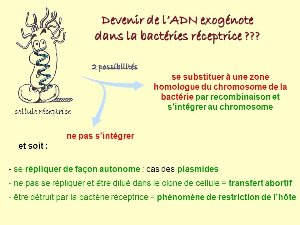 Devenir de l'ADN exogénote dans la bactéries réceptrice