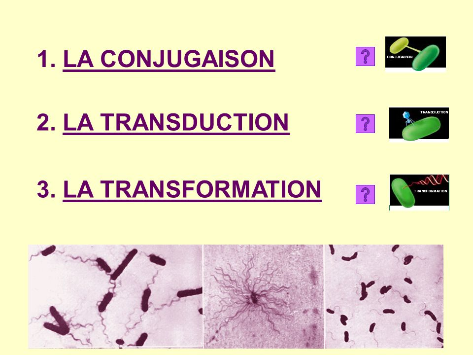 1. LA CONJUGAISON 2. LA TRANSDUCTION 3. LA TRANSFORMATION