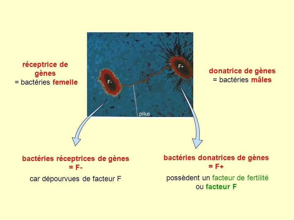 bactéries donatrices de gènes