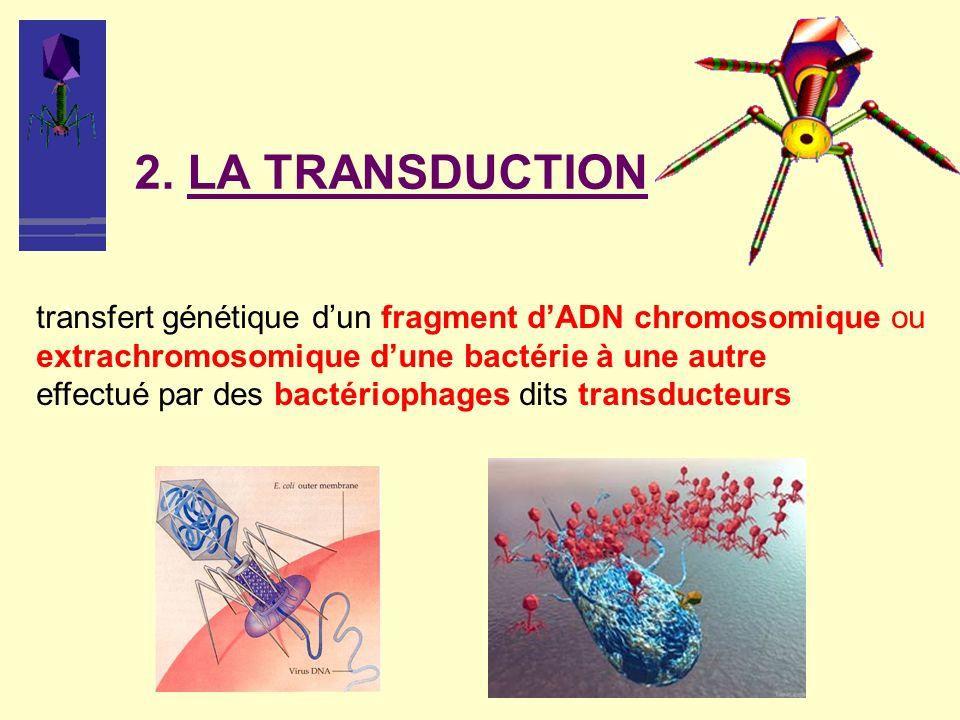 2. LA TRANSDUCTION transfert génétique d'un fragment d'ADN chromosomique ou extrachromosomique d'une bactérie à une autre.