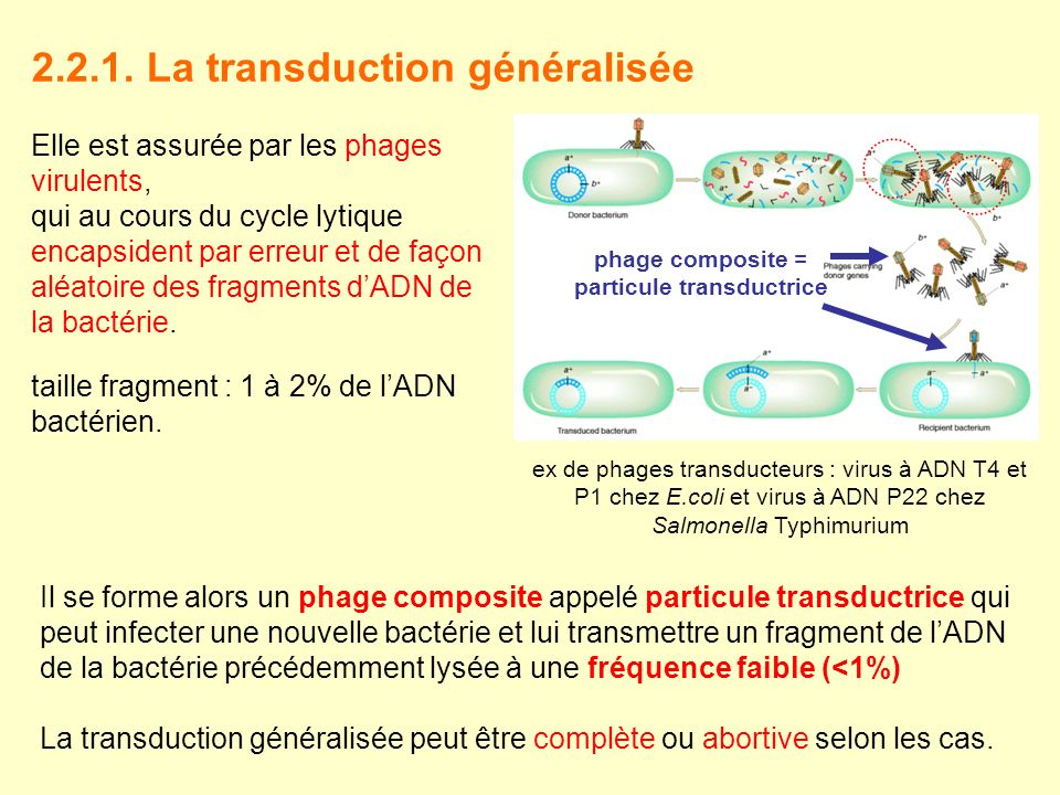 phage composite = particule transductrice