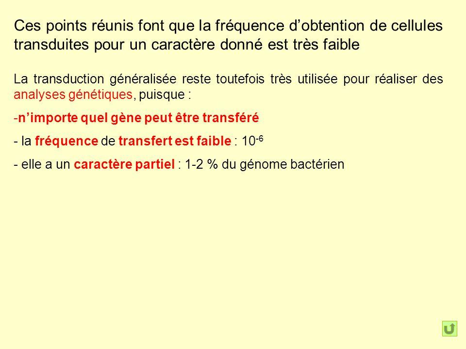 Ces points réunis font que la fréquence d'obtention de cellules transduites pour un caractère donné est très faible