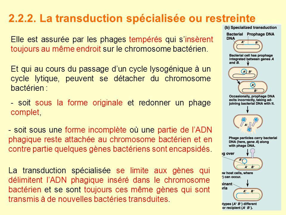 2.2.2. La transduction spécialisée ou restreinte