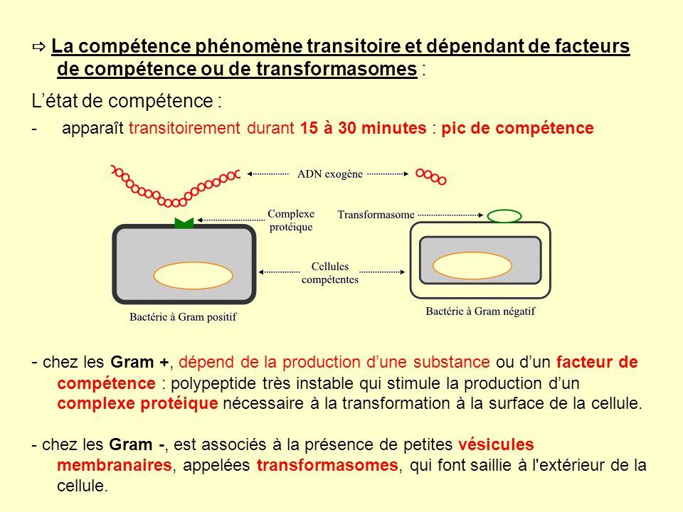  La compétence phénomène transitoire et dépendant de facteurs de compétence ou de transformasomes :