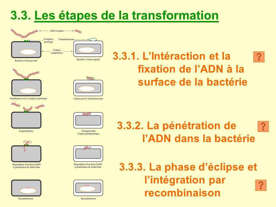 3.3. Les étapes de la transformation