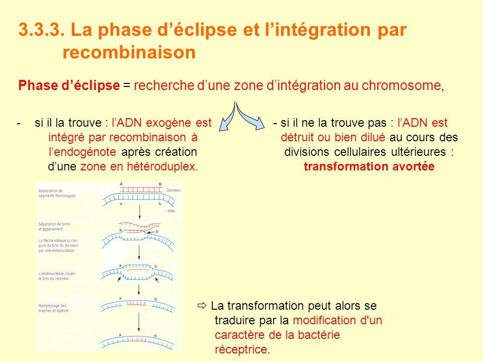 3.3.3. La phase d'éclipse et l'intégration par recombinaison