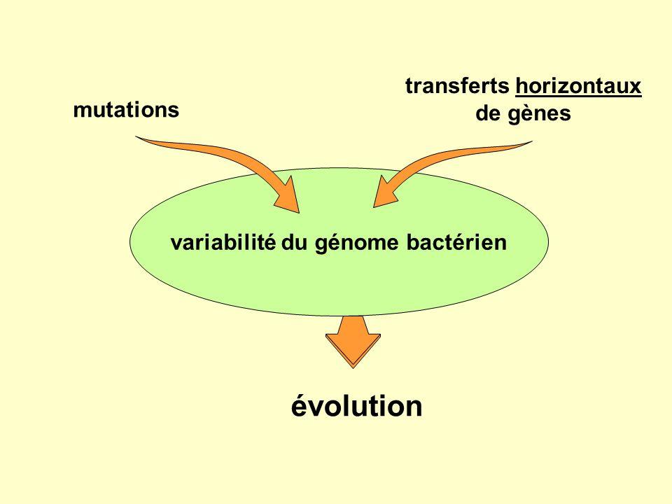 transferts horizontaux de gènes variabilité du génome bactérien