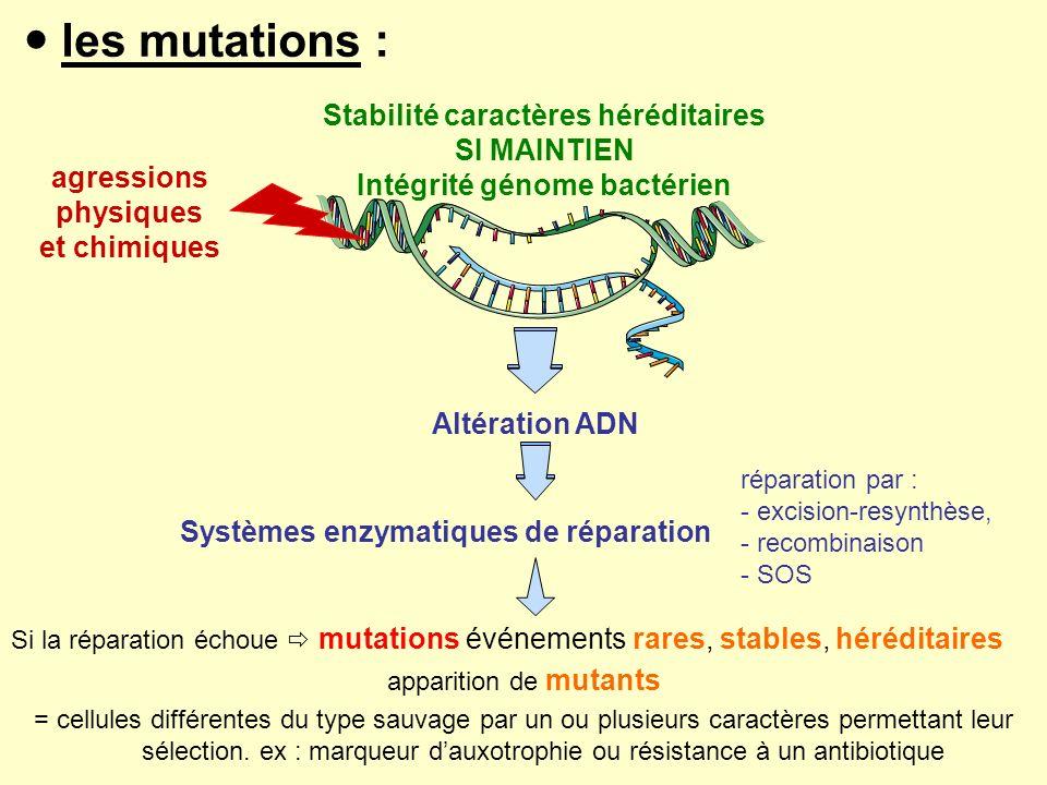  les mutations : Stabilité caractères héréditaires SI MAINTIEN