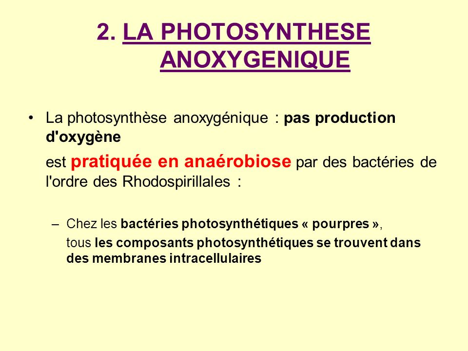 2. LA PHOTOSYNTHESE ANOXYGENIQUE