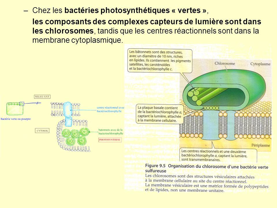 Chez les bactéries photosynthétiques « vertes »,