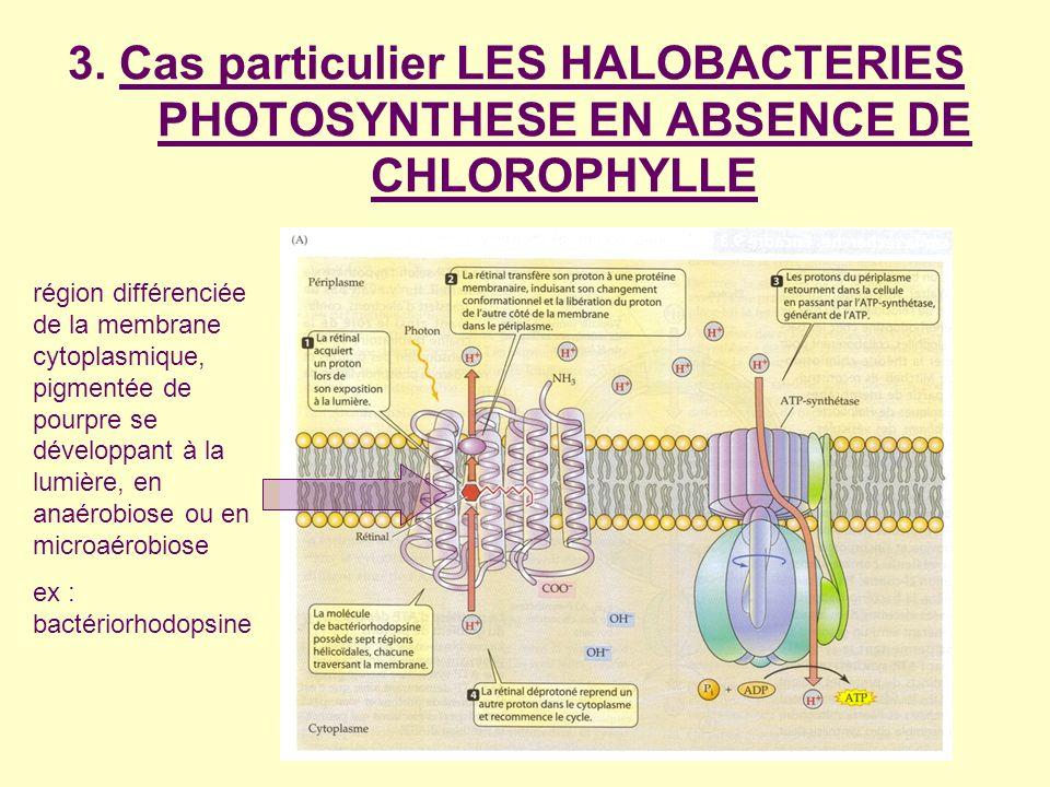 3. Cas particulier LES HALOBACTERIES PHOTOSYNTHESE EN ABSENCE DE CHLOROPHYLLE