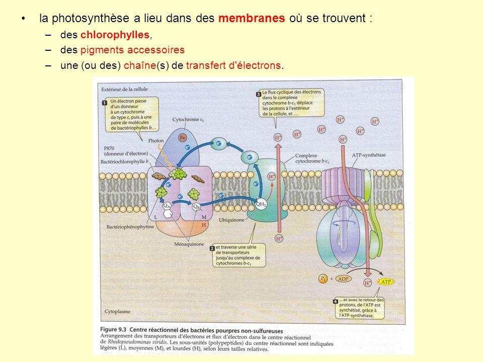 la photosynthèse a lieu dans des membranes où se trouvent :