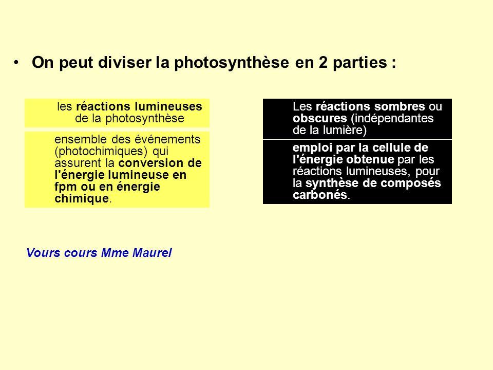 les réactions lumineuses de la photosynthèse