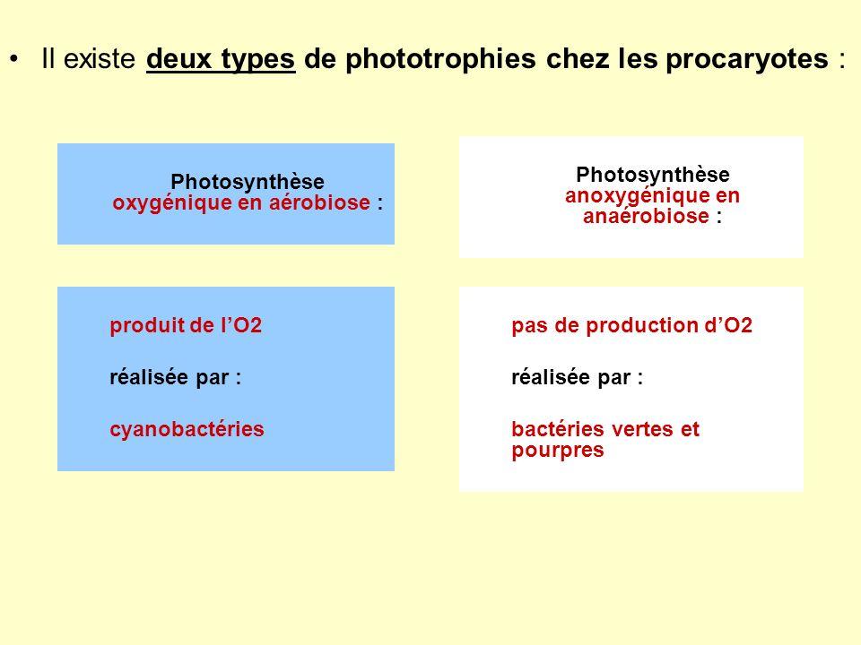 Il existe deux types de phototrophies chez les procaryotes :