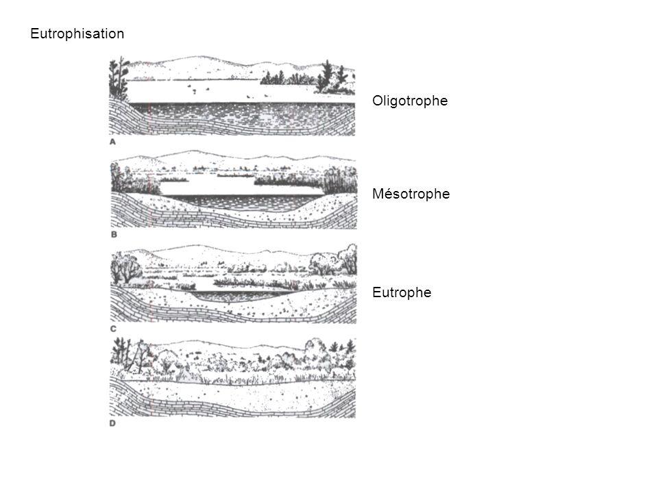 Eutrophisation Oligotrophe Mésotrophe Eutrophe