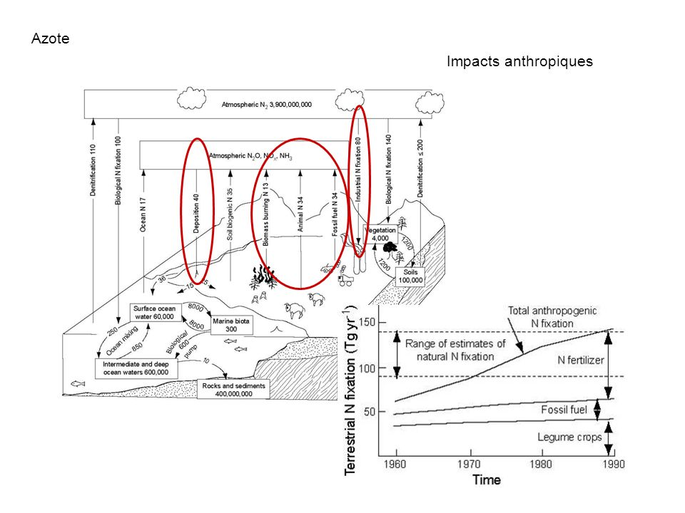 Azote Impacts anthropiques Fixation atmosphérique :