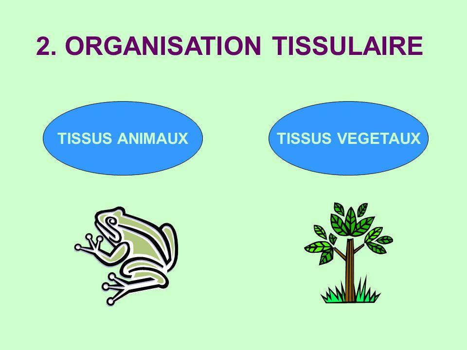 2. ORGANISATION TISSULAIRE