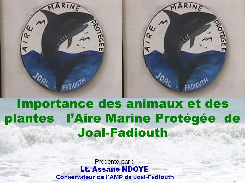 Conservateur de l'AMP de Joal-Fadiouth