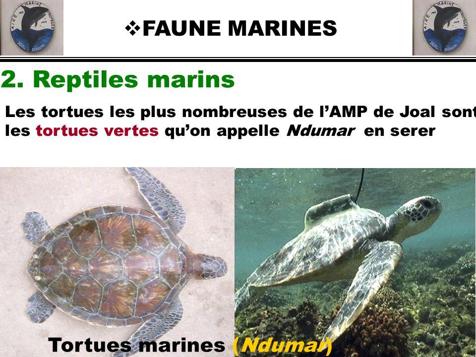 2. Reptiles marins FAUNE MARINES Tortues marines (Ndumar)
