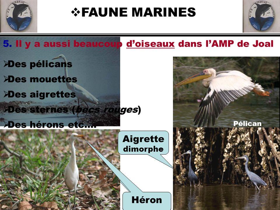 FAUNE MARINES 5. Il y a aussi beaucoup d'oiseaux dans l'AMP de Joal