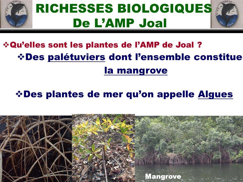 RICHESSES BIOLOGIQUES