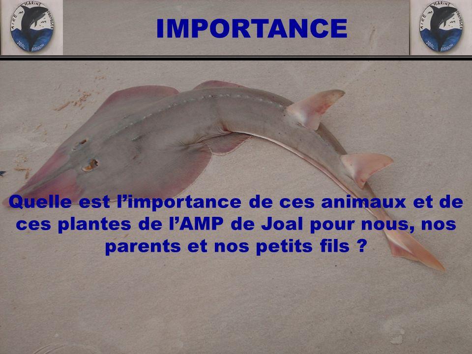 IMPORTANCE Quelle est l'importance de ces animaux et de ces plantes de l'AMP de Joal pour nous, nos parents et nos petits fils