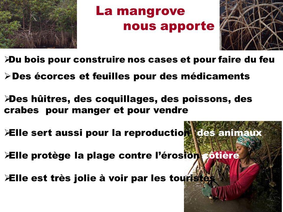 La mangrove nous apporte Des écorces et feuilles pour des médicaments