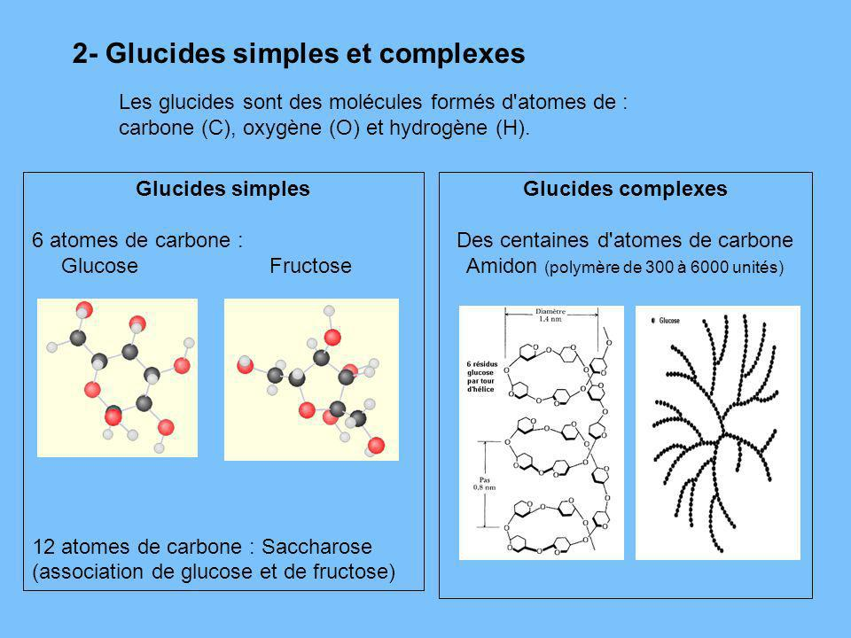 2- Glucides simples et complexes