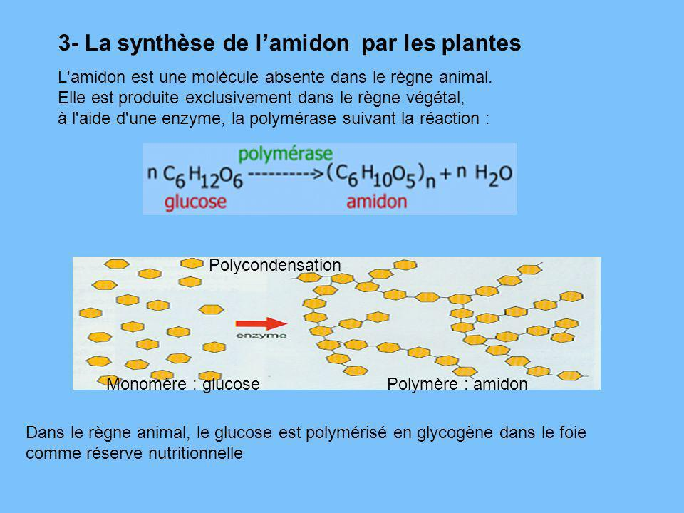 3- La synthèse de l'amidon par les plantes