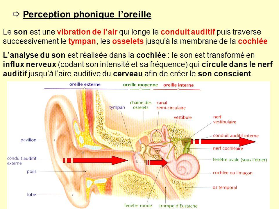  Perception phonique l'oreille