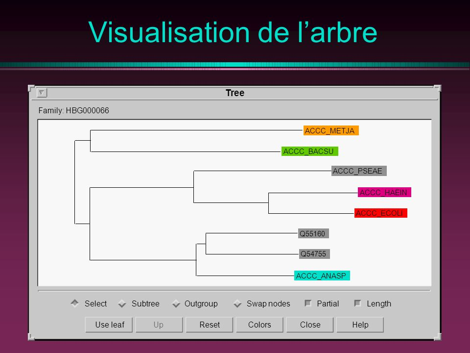 Visualisation de l'arbre