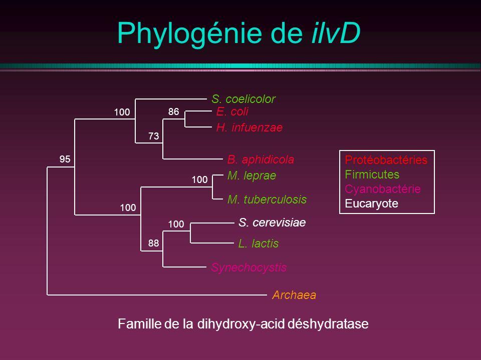 Famille de la dihydroxy-acid déshydratase
