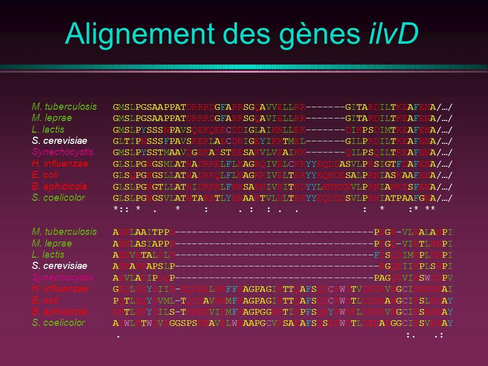 Alignement des gènes ilvD