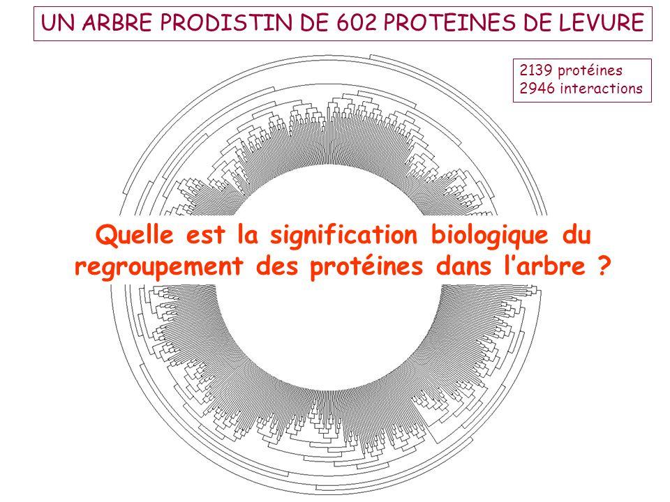 UN ARBRE PRODISTIN DE 602 PROTEINES DE LEVURE