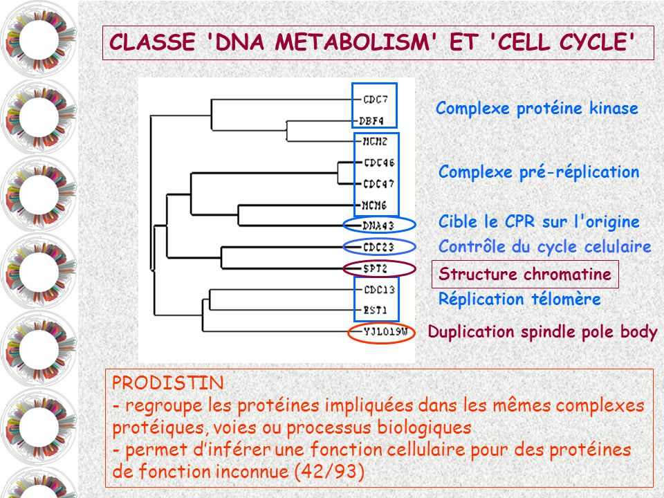 CLASSE DNA METABOLISM ET CELL CYCLE