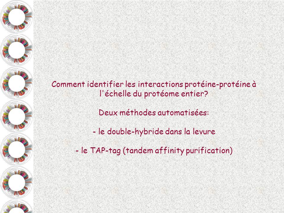 Deux méthodes automatisées: le double-hybride dans la levure
