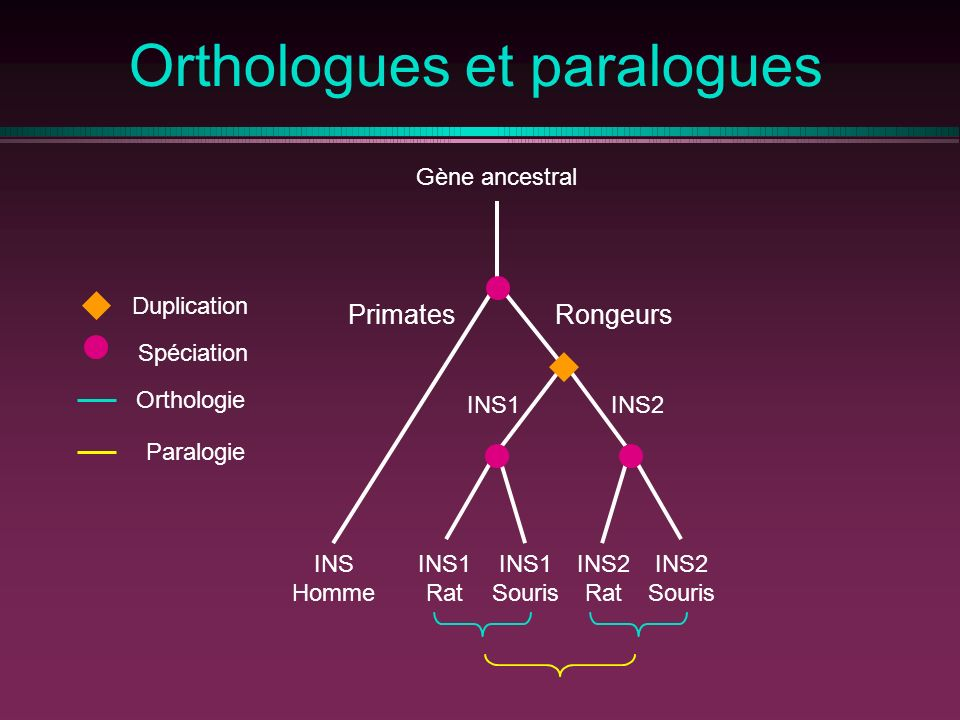 Orthologues et paralogues