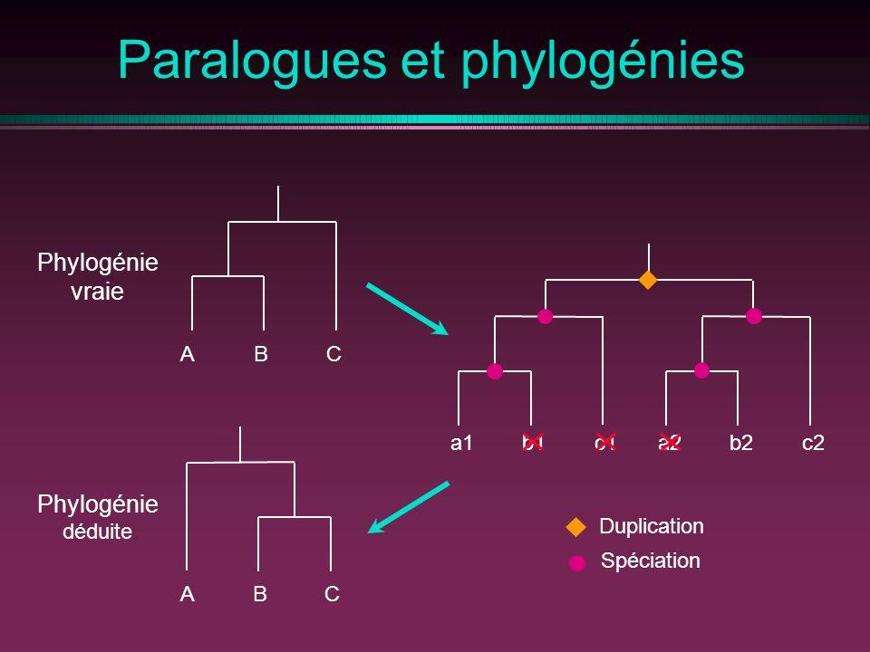 Paralogues et phylogénies