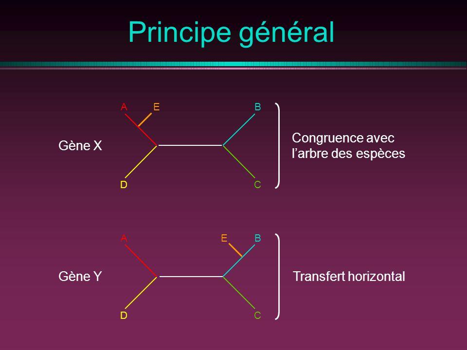 Principe général Congruence avec Gène X l'arbre des espèces Gène Y