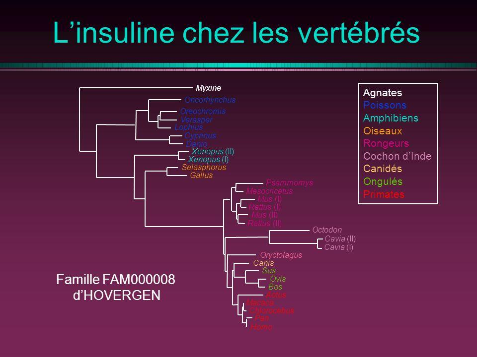 L'insuline chez les vertébrés