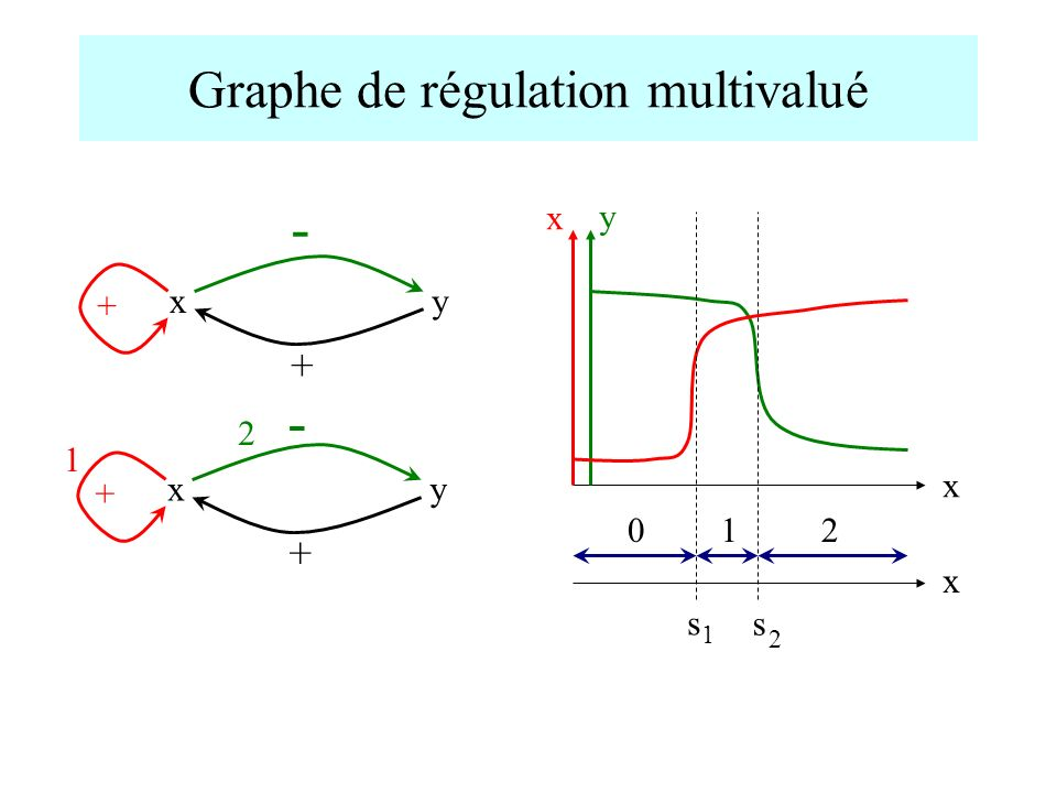 Graphe de régulation multivalué