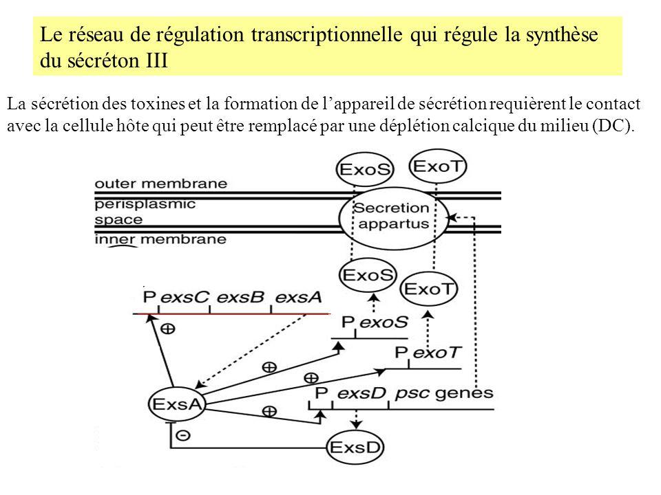 Le réseau de régulation transcriptionnelle qui régule la synthèse du sécréton III
