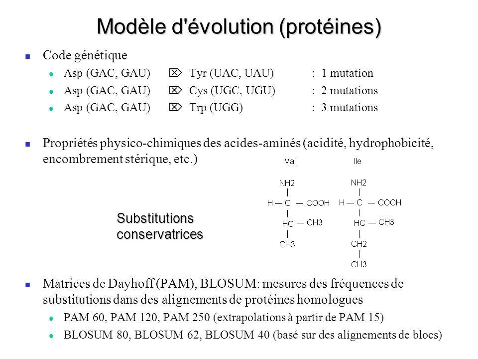 Modèle d évolution (protéines)